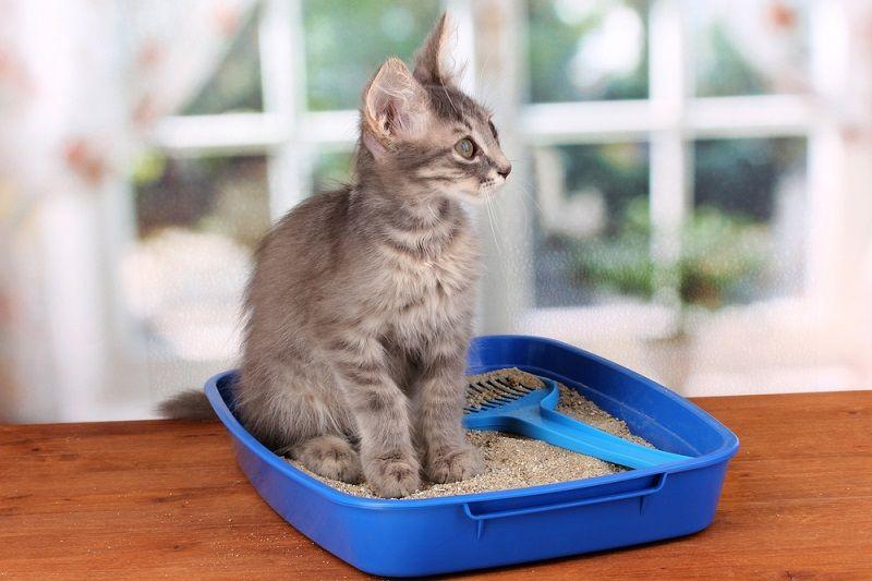 Kediniz için En Sağlıklı Kedi Kumları