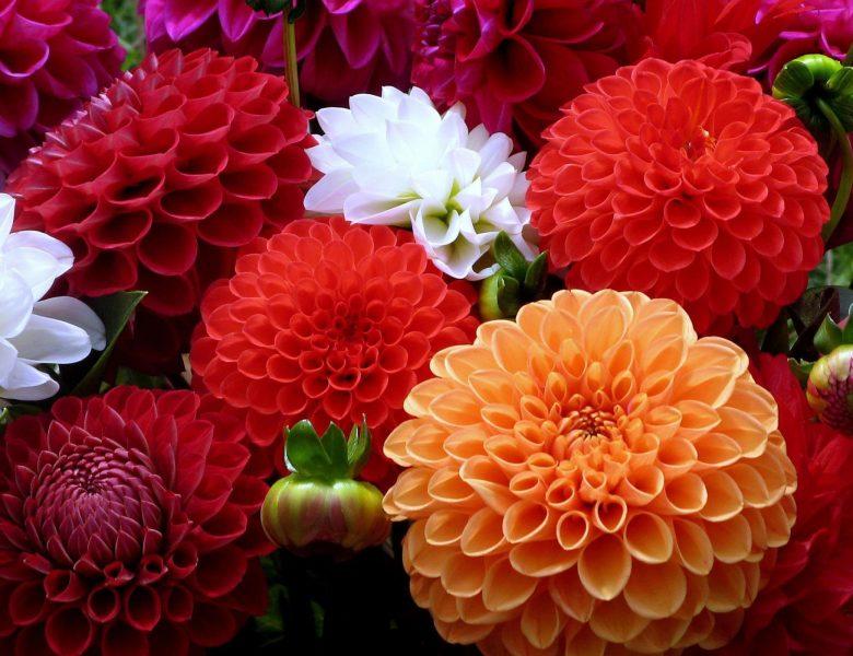 Çiçek ile Sevdiklerinizi Mutlu Edin